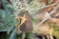 05-foto-natuur