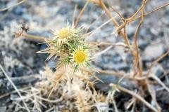 06-foto-natuur